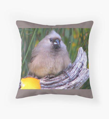 Muisvoël / Mousebird. Throw Pillow