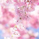 Pretty pastel cherry blossom cascade by Zoe Power
