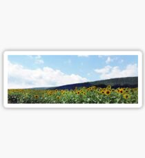 A Field of Sunflowers in Pennsylvania Sticker