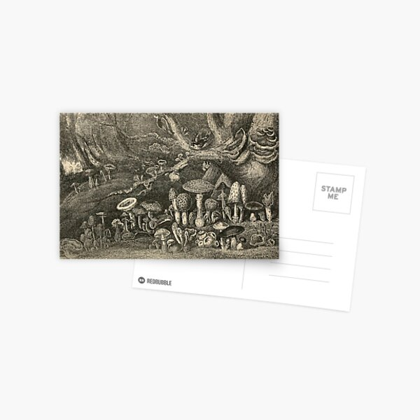 Mushrooms And Toadstools Postcard
