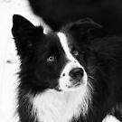 Black & White Dog by Karen Havenaar