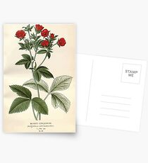 Favourite flowers of garden and greenhouse Edward Step 1896 1897 Volume 2 0031 Silvery Cinquefoil Postcards