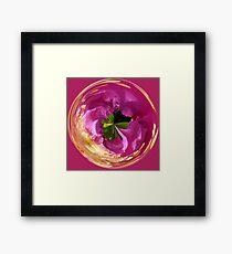Spherical dog rose Framed Print