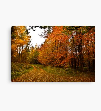 Autumn in the Woods Canvas Print