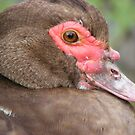 Muscovy Duck - smiling! Close up by monkeyferret
