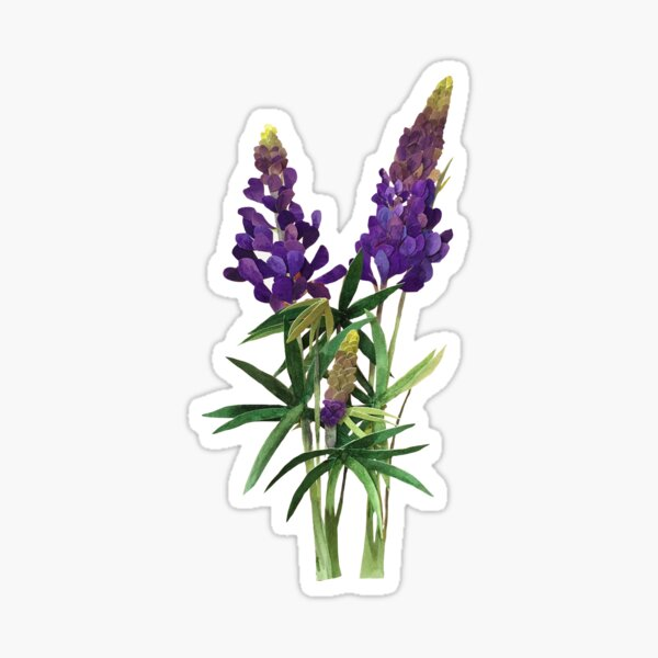 Lovely Lupine Sticker