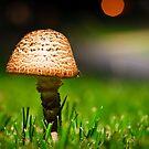 Streetlight Mushroom by Brian Watson