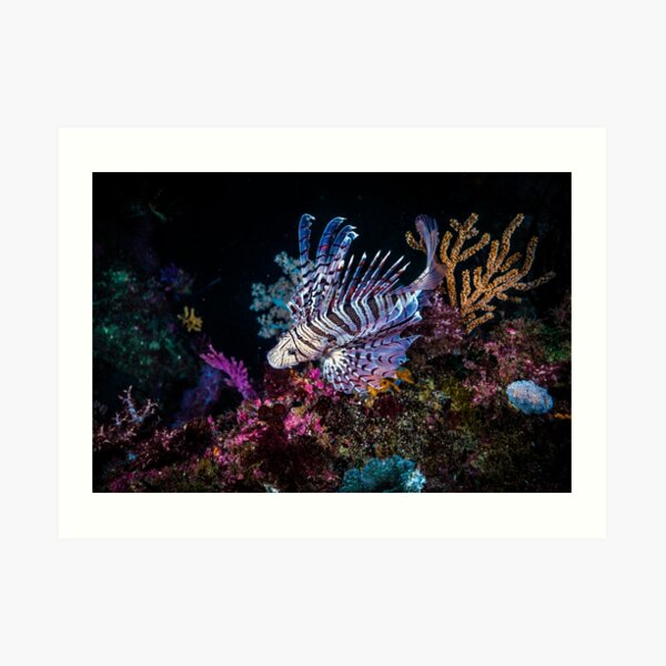 Colorful Lionfish at deep coral reef Art Print