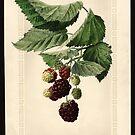 Vintage Brambles Print by Douglas E.  Welch