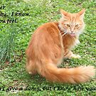 Another Birthday Cat Greeting Card by DebbieCHayes