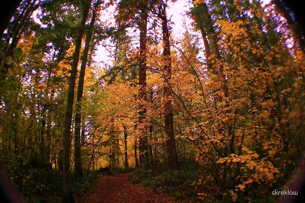 Fall Foliage Canopy by skreklow