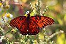 Gulf Fritillary Butterfly by RebeccaBlackman