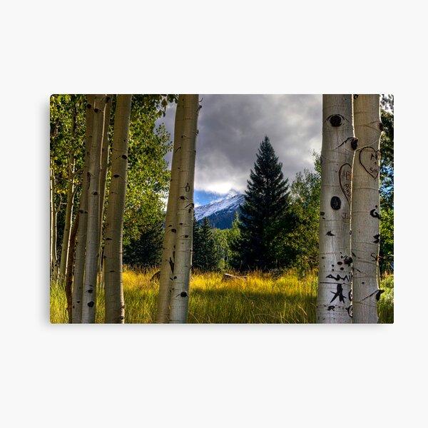 Nature's Window Canvas Print