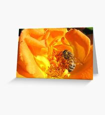 Bee ~ Stopping to smell the Rose Greeting Card