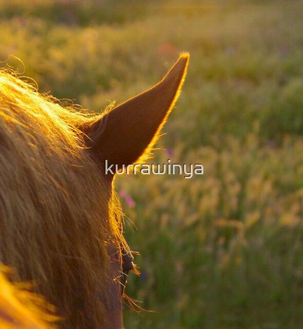 Living sunlight by Penny Kittel