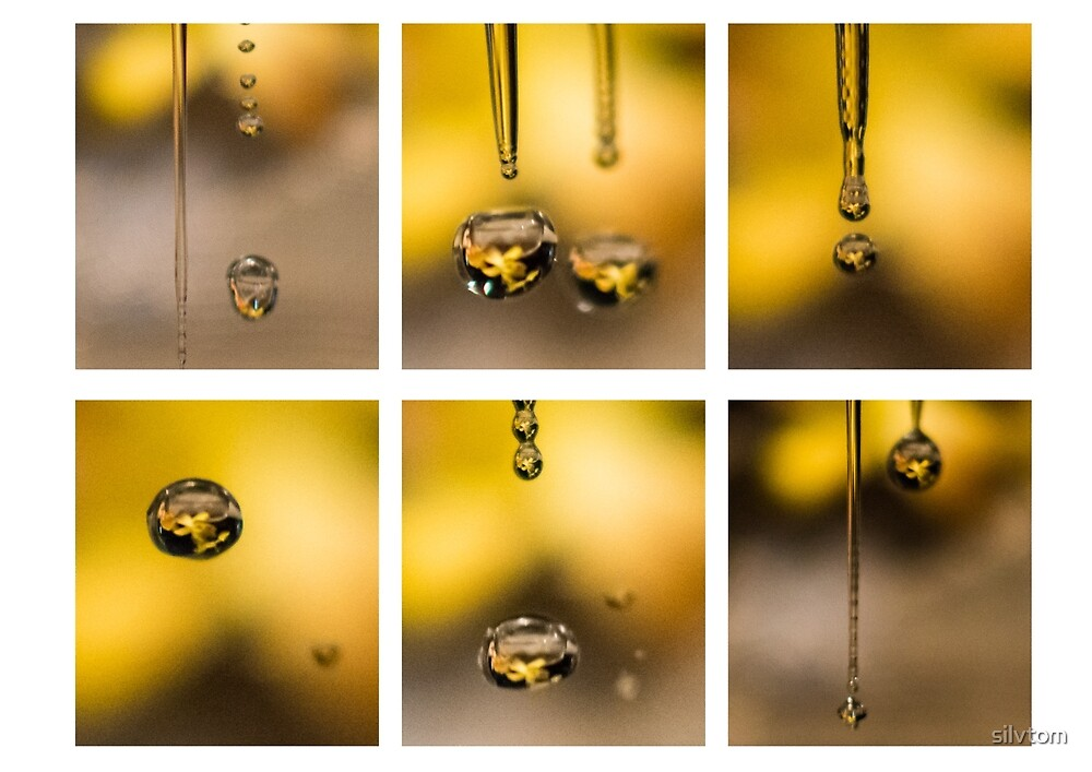 Finding Yellow by Silvia Tomarchio