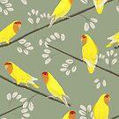 rosy-faced lovebirds by lobitos