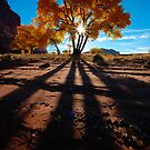 Cottonwood Shadows by Clayhaus