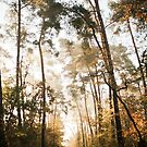 autumn forest by jrenner