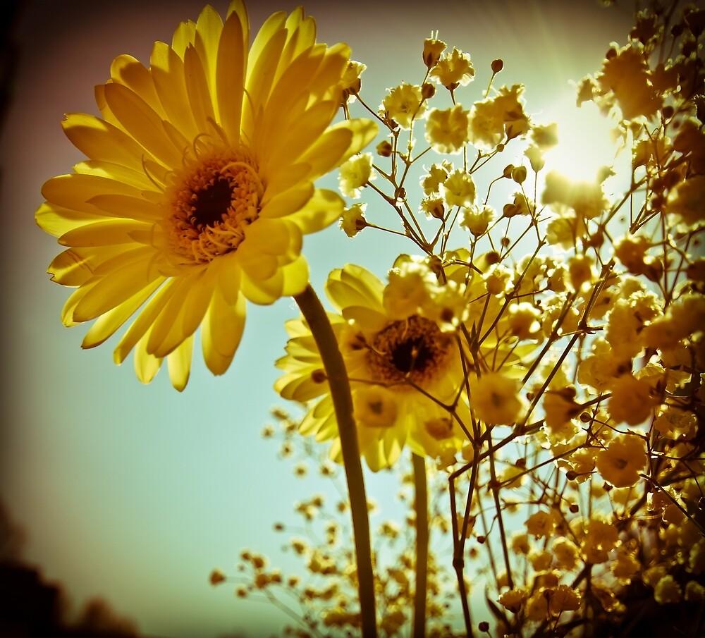 Sunshine Gerberas by Becky Curran