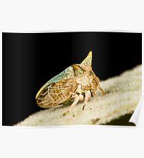 Green Horned Treehopper Poster