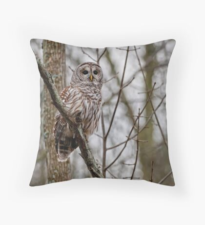 Barred Owl - Presqu'ile Provincial Park, Brighton, Ontario Throw Pillow