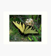 Eastern Swallowtail Butterfly in macro Art Print