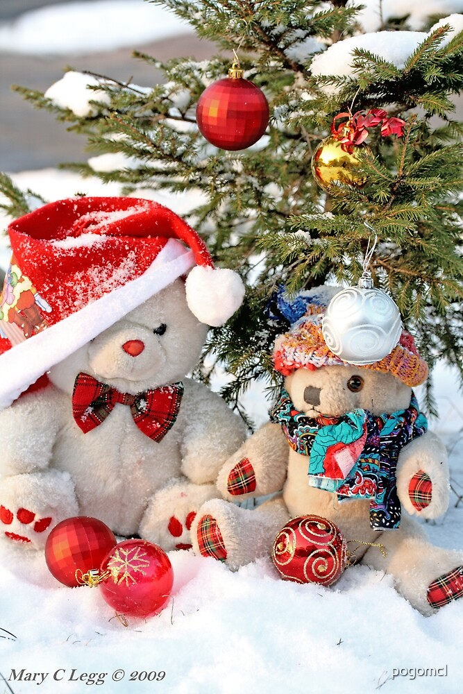 Fatso Teddy bear and Erasmus Bear under the outdoor Christmas Tree by pogomcl
