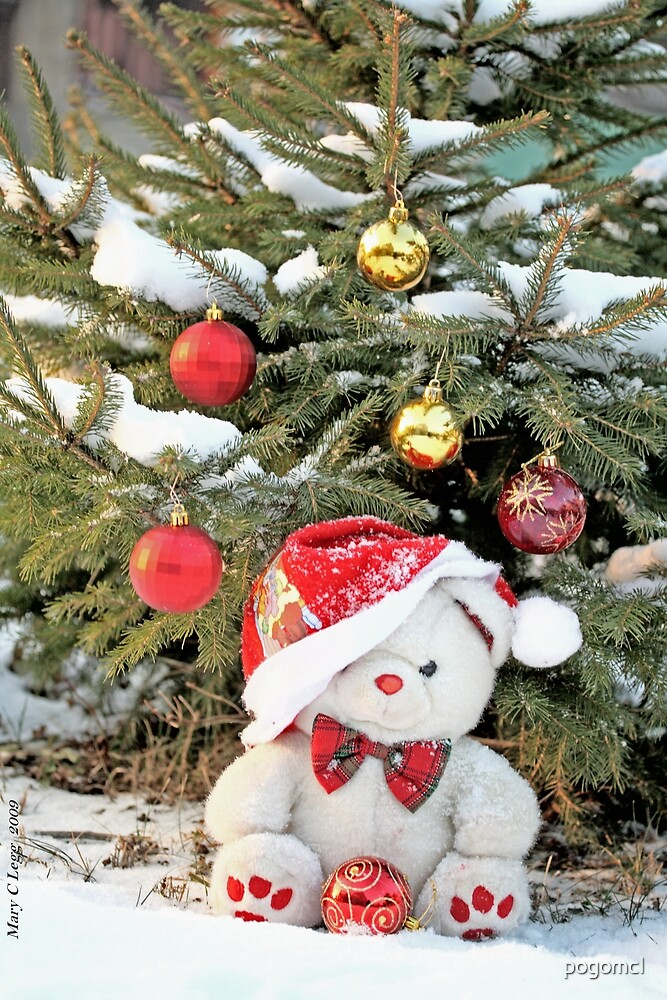 Fatso Teddy Bear under the outdoor Christmas Tree by pogomcl