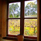 Pot in window by bobby1