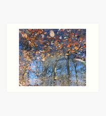 Canopy Reflections Art Print