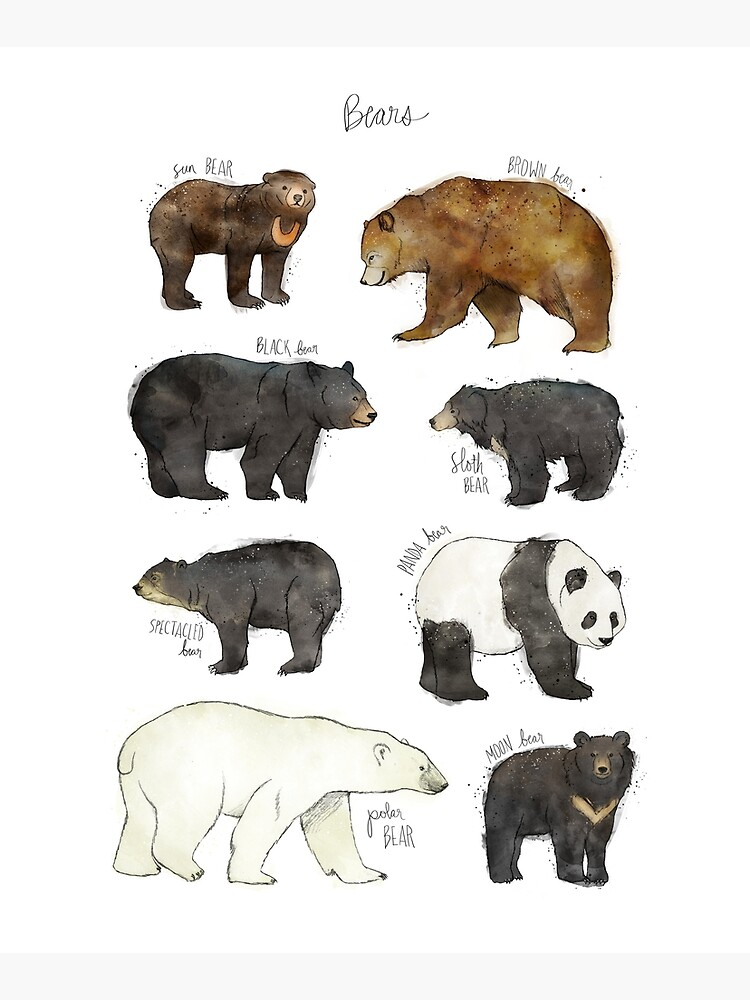 Bears by AmyHamilton