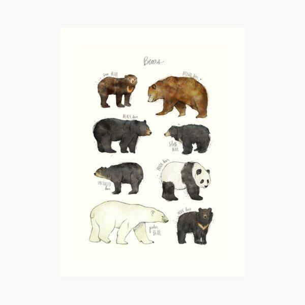 Bären Kunstdruck