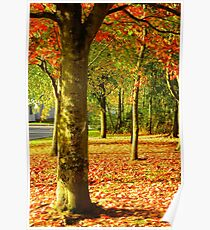 Golden Autumn Trees Poster