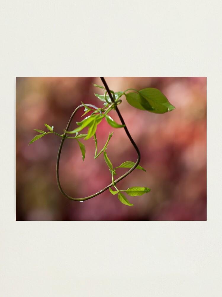 Alternate view of Natural loop Photographic Print