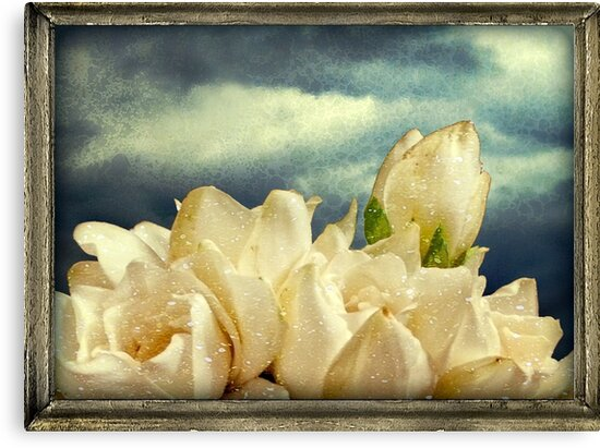 Flowers and Sky by DFLC Prints