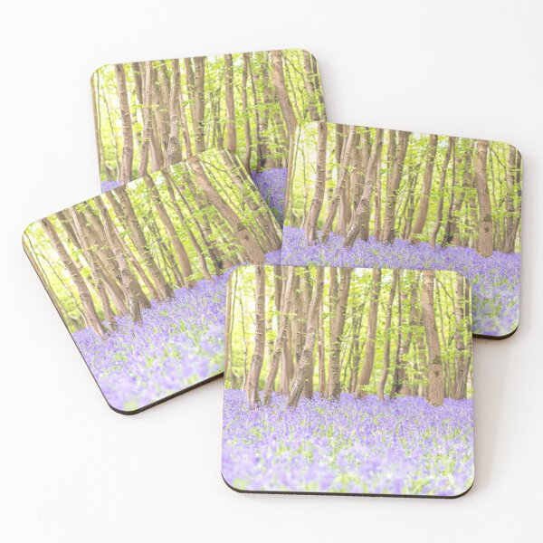 Bluebell woodland, East Sussex, UK Coasters (Set of 4)
