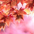 Autumn pinks by Zoe Power