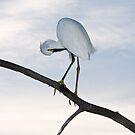 Snowy Egret Sunset by Frank Bibbins