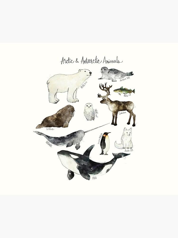 Arctic & Antarctic Animals by AmyHamilton