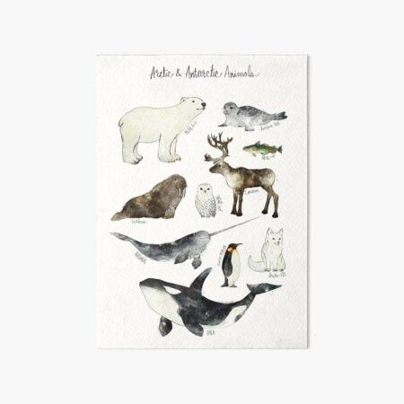 Arctic & Antarctic Animals Art Board Print