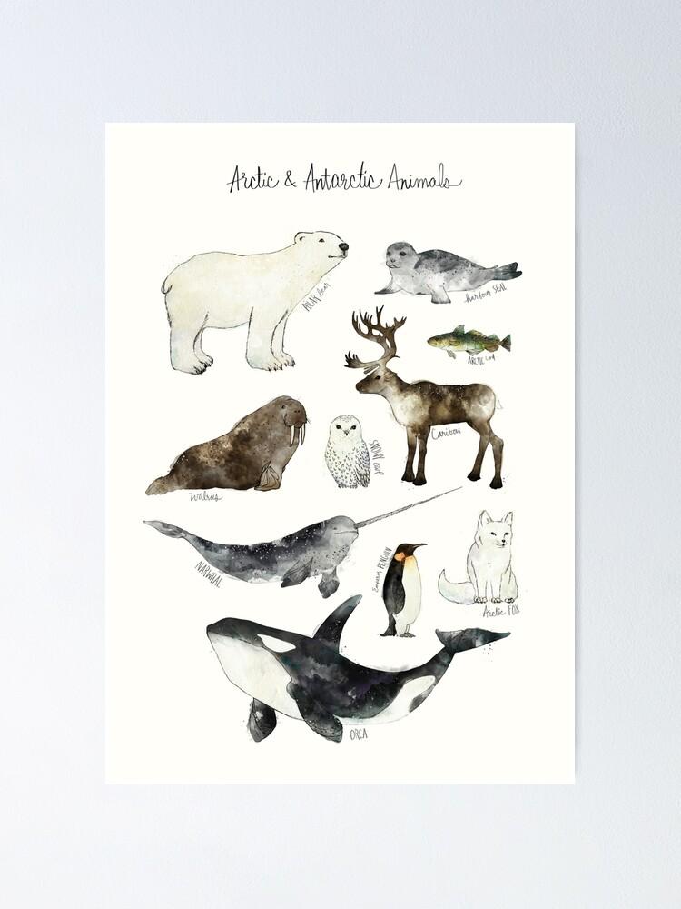 Alternate view of Arctic & Antarctic Animals Poster