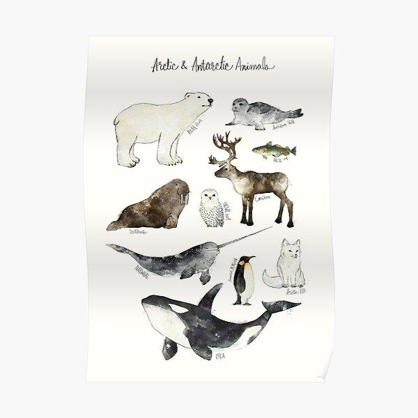 Arctic & Antarctic Animals Poster