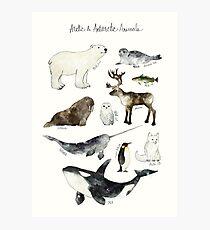 Lámina fotográfica Animales árticos y antárticos