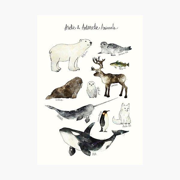 Arctic & Antarctic Animals Photographic Print