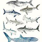 Sharks by Amy Hamilton