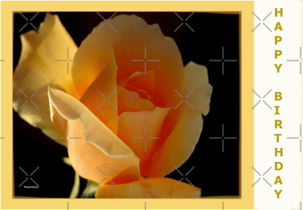 BIRTHDAY CARD - APRICOT ROSE by Magriet Meintjes