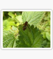 Hoverfly on a Stinging Nettle leaf Sticker