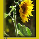 THE SUNFLOWER BIRTHDAY CARD by Magriet Meintjes