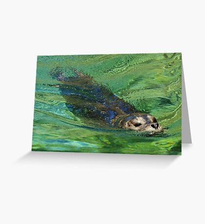 Harbor seal Greeting Card